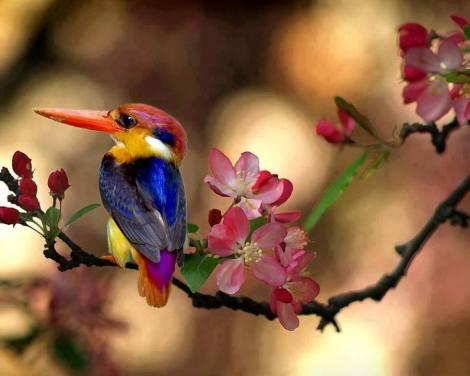 birdcam italia